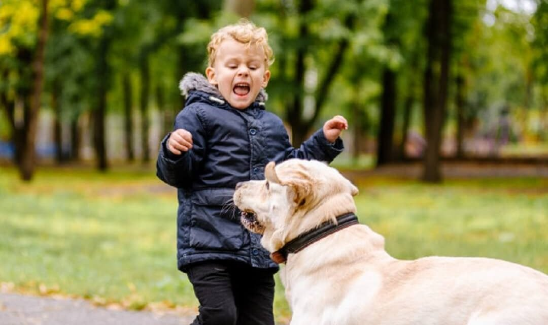 How to Claim a Dog Bite Injury? Facts and FAQs